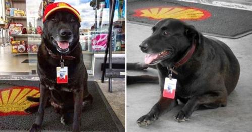 მიტოვებულმა ძაღლმა ავტოგასამართ სადგურზე სამსახური იშოვა