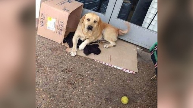 ერთგული ძაღლი ერთი კვირაა კლინიკის კართან წევს და პატრონს ელოდება, თუმცა, მისი პატრონი მოკვდა