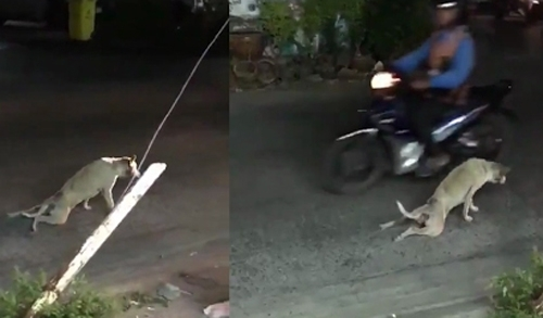 თითქოს ამ ძაღლს გადაადგილება უჭირს, მაგრამ დააკვირდით რას აკეთებს შემდეგ... (+ვიდეო)