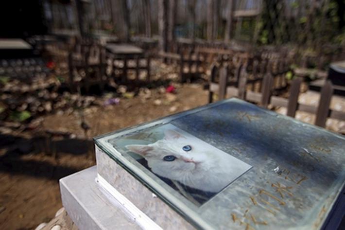 ქალბატონი კატას მარხავდა და.. მოკვდა…