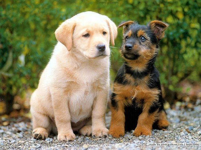 მკვლევარებმა იდეალური ძაღლის პორტრეტი შექმნეს - იხილეთ ფოტო