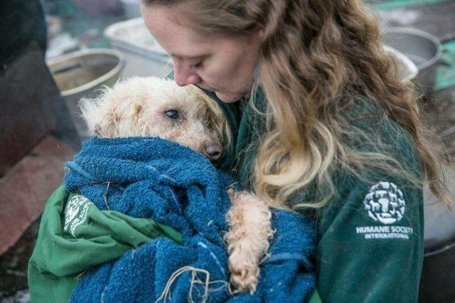 ცხოველთა დამცველებმა, სამხრეთ კორეაში, 200-მდე ძაღლი საშინელი პირობებისგან იხსნეს