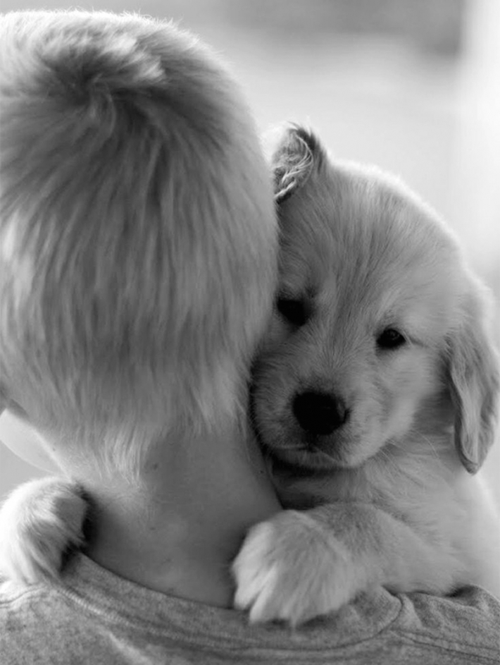 ძაღლები, რომლებიც სიყვარულით ეხუტებიან პატრონებს (+ფოტო)