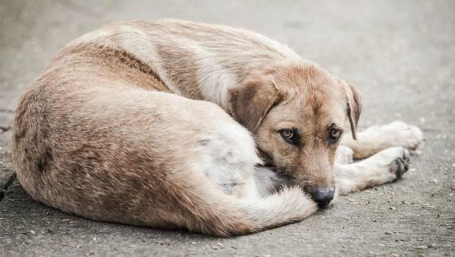 ცხოველთა უფლებადამცველების ერთობლივი განცხადება საქართველოს პარლამენტს და შსს სამინისტროს