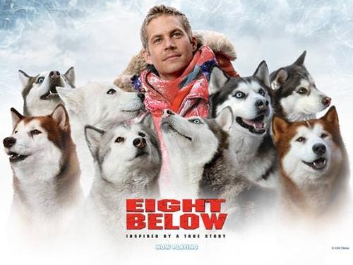 """14 საუკეთესო ფილმი """"თოვლის ძაღლების"""" მონაწილეობით"""