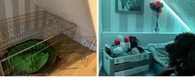 პატრონმა ძაღლს მყუდრო და ლამაზად გაფორმებული ოთახი გაუკეთა