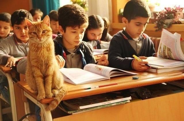 """კატა მესამე კლასში """"სწავლობს"""", როდესაც ის სკოლაში აღარ შეუშვეს, მოიწყინა და საკვებზეც უარი თქვა"""