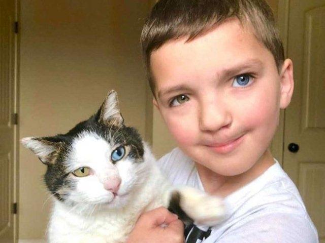 როგორ დაუმეგობრდა კურდღლისტუჩა და სხვადასხვა  ფერის თვალების მქონე ბავშვი თავისივე მსგავს კატას?