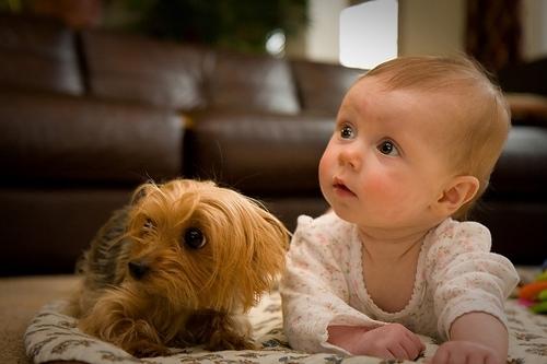 საშიშია თუ არა სახლში ცხოველის ყოლა პატარა ბავშვთან ერთად?