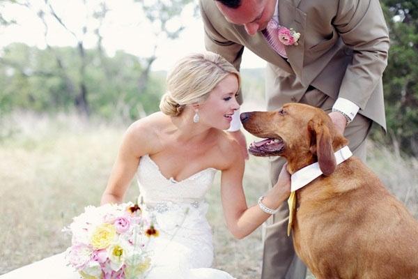 10 ულამაზესი ძაღლი, რომლებმაც მათი პატრონების ქორწილი დაჩრდილეს (+ფოტო)