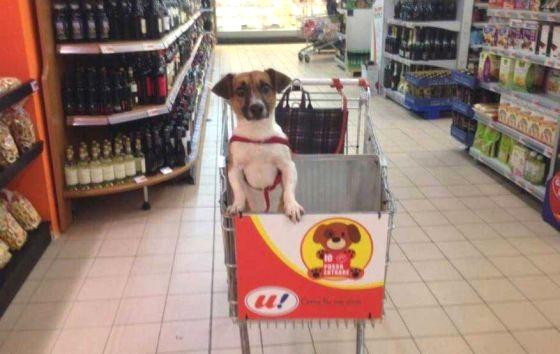 სუპერმარკეტში სპეციალურად ძაღლებისთვის განკუთვნილი ურიკები გამოჩნდა