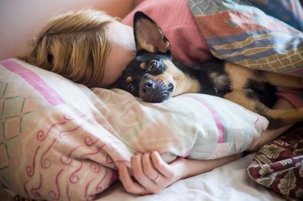 ძაღლები, რომლებიც ყველაფერს დათმობენ პატრონთან ძილის გამო (+ფოტო)