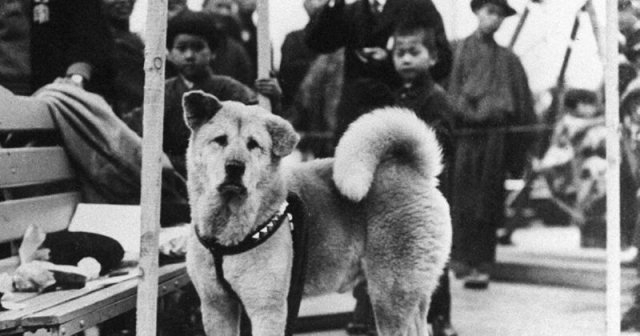 მსოფლიოში ყველაზე ერთგული ძაღლის, ჰაჩიკოს იშვიათი ფოტოები