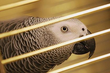 ქუვეითის სასამართლომ ოჯახური ღალატის საქმესთან დაკავშირებით თუთიყუშის ჩვენების მოსმენაზე უარი განაცხადა
