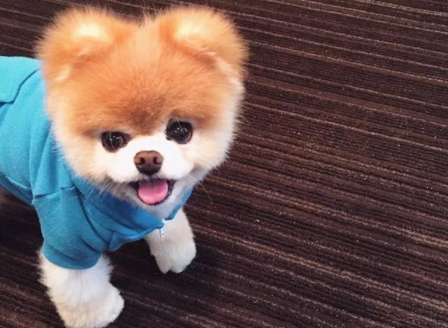 """ყველასთვის საყვარელი ძაღლი """"ბოო"""", მეგობრის სიკვდილის შემდეგ, დარდით მოკვდა"""