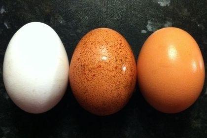 კვერცხის ყოველდღიური მიღება სასარგებლო აღმოჩნდა