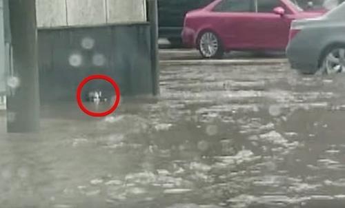 მამაკაცმა წყალდიდობის დროს გადაარჩინა უსუსური კნუტი, რომელიც შეშინებული კედელს ეკვროდა (+ვიდეო)