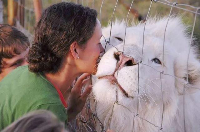 ცხოველთა სამყაროს ალბინოსი წარმომადგენლები (საოცარი ფოტოები)