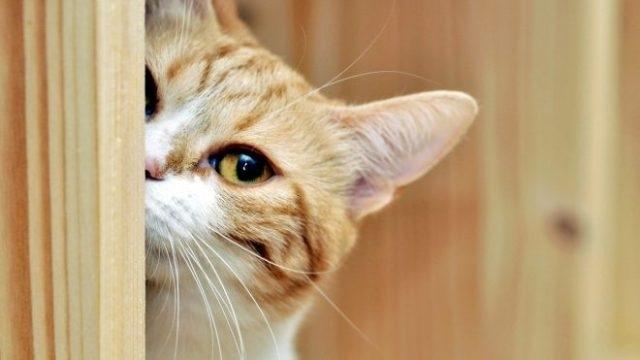დაუმორჩილებელი კატა ანუ რატომ იქცევა ჩვენი ფუმფულა ბინადარი გამაღიზიანებლად?
