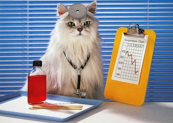 5 სახეობის ცხოველი, რომელიც ადამიანს მკურნალობს