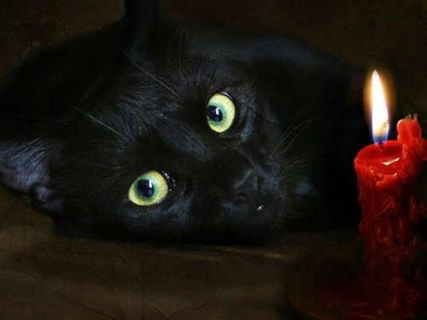 რატომ თვლის  ზოგიერთი ადამიანი კატას უწმინდურ ცხოველად