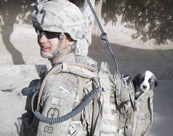 ომში  დაჭრილ ჯარისკაცს არ ჰქონდა იმედი, რომ თავის ლეკვს, რომელსაც ზურგჩანთით ატარებდა, ისევ შეხვდებოდა... (+ვიდეო)