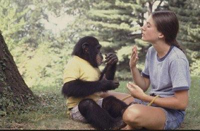 მაიმუნს უთხრეს, რომ შვილი დაეღუპა
