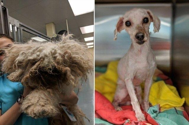 """ძაღლი 2 წელი საწოლის ქვეშ ცხოვრობდა...მისი ამბავი """"კონკიას"""" ზღაპარს მოგაგონებთ"""