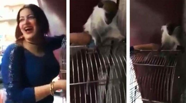 მაიმუნის მიმართ უდიერად მოპყრობის ფაქტზე ეგვიპტელ ქალს 3-წლიანი პატიმრობა მიესაჯა