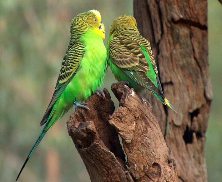 ციმბირში უძველესი თუთიყუშის ნაშთები აღმოაჩინეს