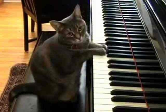 12 სასაცილო კატა, რომლებმაც პატრონების ქცევები კარგად აითვისეს
