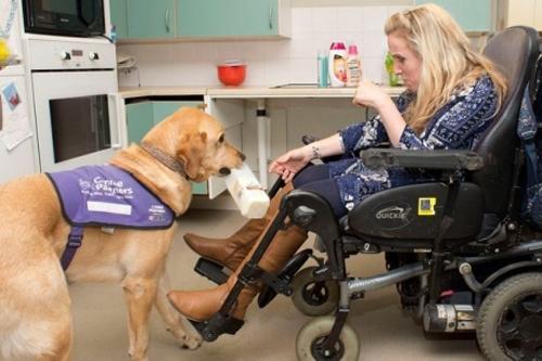 ძაღლი პარალიზებულ პატრონს ჩაცმასა და პროდუქტების ყიდვაში ეხმარება