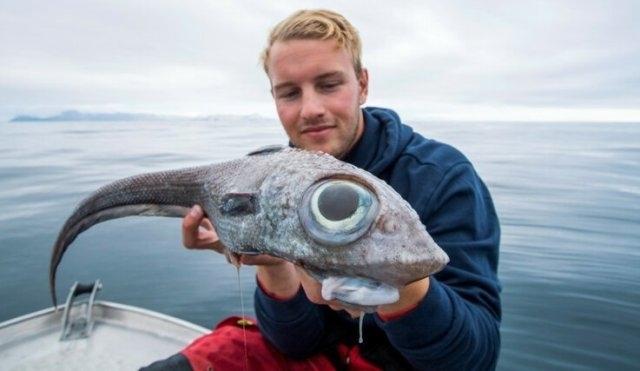 ნორვეგიაში დაიჭირეს თევზი ანომალიურად დიდი თვალებით