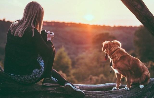 ფსიქოლოგებმა დაამტკიცეს: ცხოველები ხვდებიან, როდესაც ჩვენ თანაგრძნობა გვჭირდება