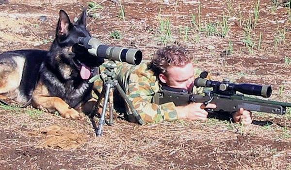 ძაღლები ადამიანის სამსახურში