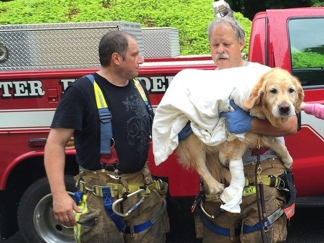 ძაღლი უსინათლო პატრონის გადასარჩენად ავტობუსს შეუვარდა