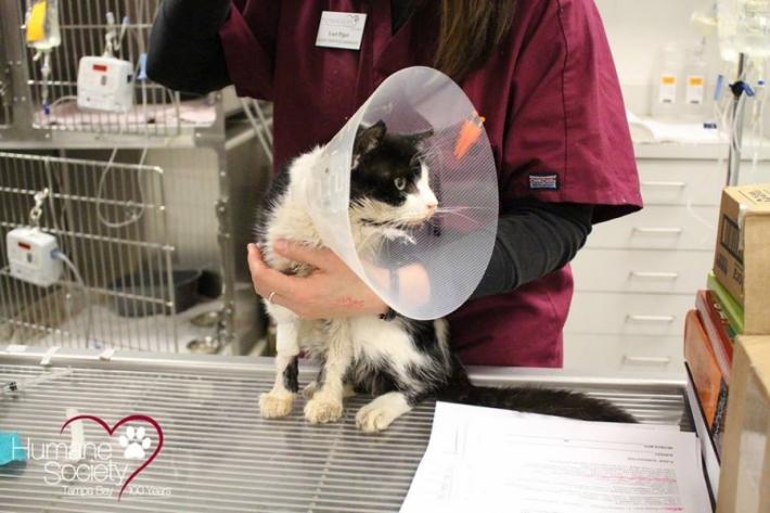 გარდაცვლილი კატა, დაკრძალვიდან 5 დღის შემდეგ სახლში დაბრუნდა (+ვიდეო)