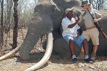 მონადირეების კიდევ ერთი მსხვერპლი-აფრიკაში 30 წლის მანძილზე ყველაზე დიდი სპილო მოკლეს