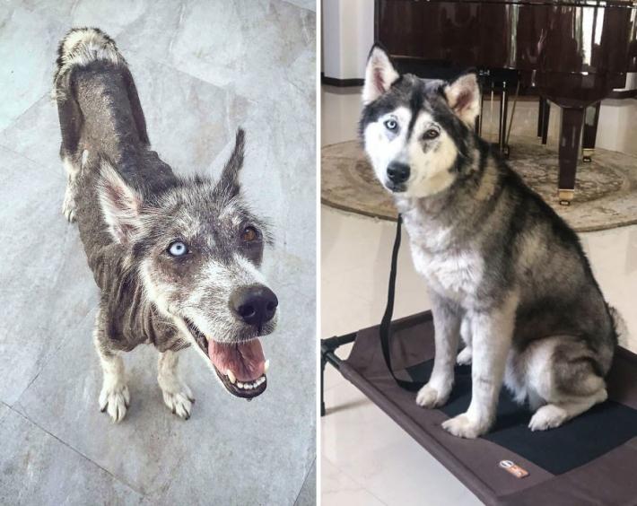 როგორ იცვლებიან ძაღლები, როდესაც ისინი თავშესაფრიდან ახალ სახლში მიჰყავთ: 9 ბედნიერი სახე