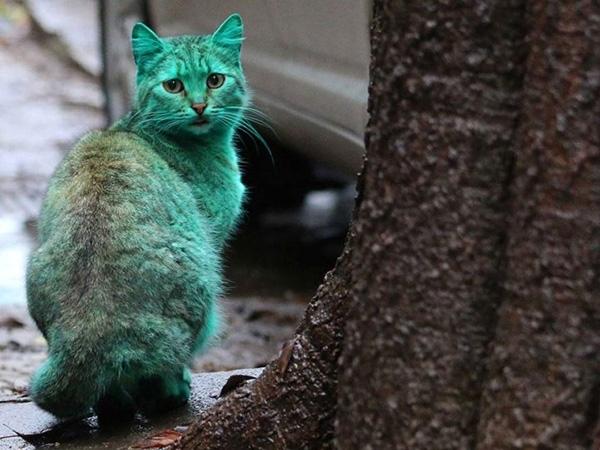იდუმალი მწვანე კატა ვარნას ქუჩებში დასეირნობს (+ვიდეო)
