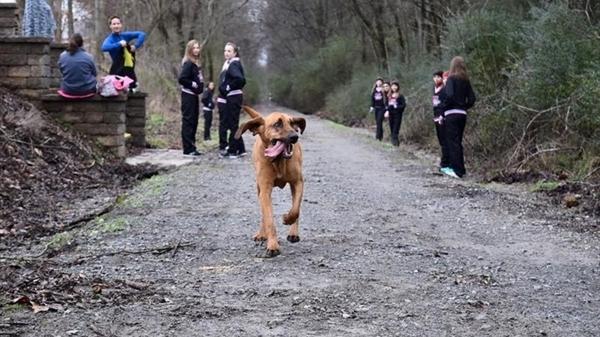 ძაღლმა, რომელიც პატრონმა ქუჩაში მოსასაქმებლად გაუშვა, მარათონზე მე-7 ადგილი დაიკავა