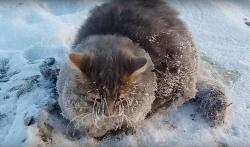 წყვილმა გადაარჩინა კატა, რომელსაც  თათები  მიწაზე მიეყინა (+ვიდეო)