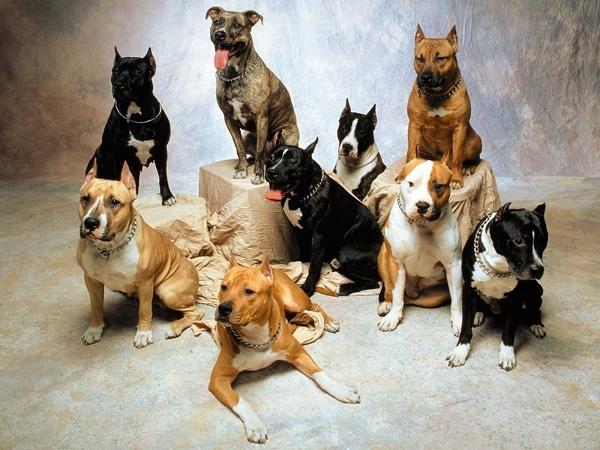 ძაღლების ბეწვის შეფერილობას ბეტა-დეფენზინის გენი განაპირეობებს