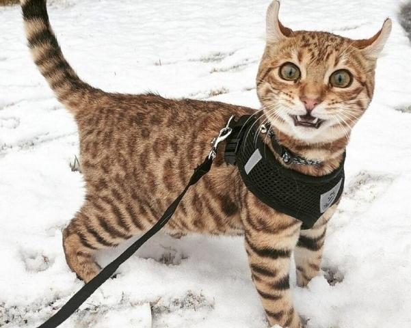 17 კატა, რომლებმაც თოვლი პირველად ნახეს (სახალისო ფოტოები)