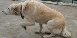 ოდესმე გინახავთ ძაღლი ასე იქცეოდეს? ის ამ მოქმედებით ცდილობს, რაღაც მნიშვნელოვანი გითხრათ