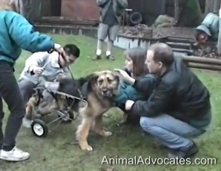 ძაღლის, სახელად ჯუდი, უმძიმესი ისტორია საოცრად ბედნიერი დასასრულით (+ვიდეო)