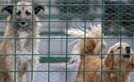 ქვეყანა, სადაც 2014 წელს ყველაზე მეტი ძაღლი მიატოვეს პატრონებმა