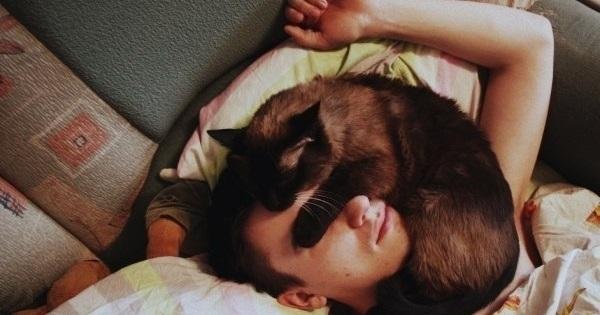 რატომ უყვარს კატას ძილის დროს პატრონზე წოლა