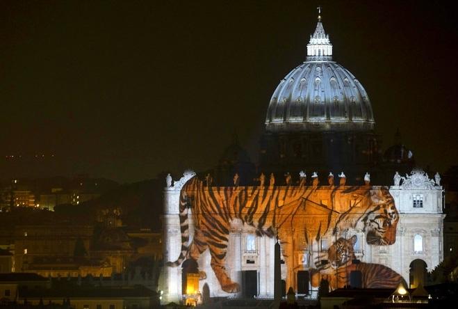 ველური ცხოველები წმინდა პეტრეს ტაძარზე (+ვიდეო)