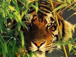 საკუთარი გამორჩენის მიზნით, მხოლოდ ადამიანები არ იტყუებიან, არამედ ცხოველებიც